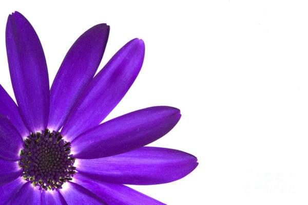 Purple Photograph - Senetti Deep Blue by Richard Thomas