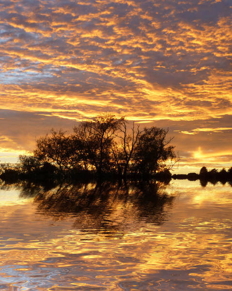 Treeline Photograph - September Evening by Sharon Lisa Clarke