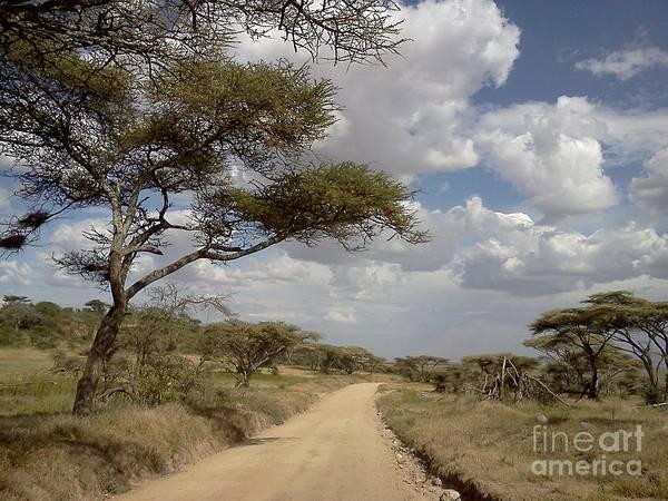 Photograph - Serengeti Highway by Chris Scroggins