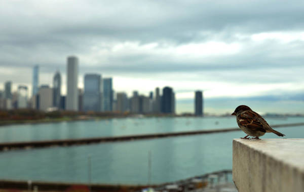Photograph - Serenity Of Chicago by Rafay Zafer