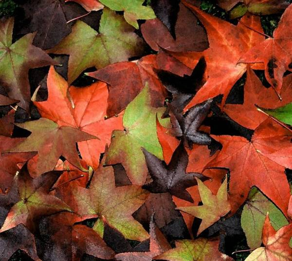 Photograph - Shades Of Autum by Tony and Kristi Middleton