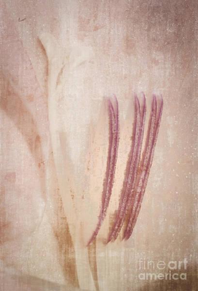 Photograph - Shades Of Pink by David Waldrop