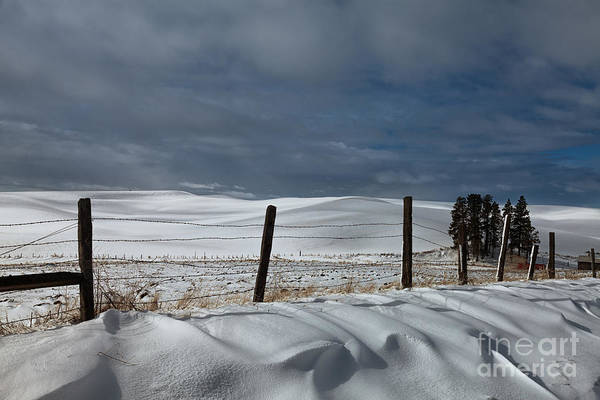 Photograph - Shades Of Winter by Beve Brown-Clark Photography