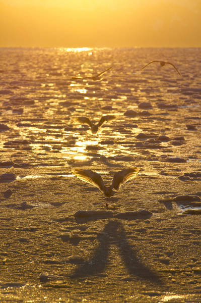 Wall Art - Photograph - Shadow Of A Gull by Tim Grams
