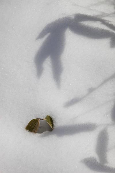 Shadow On Snow Art Print