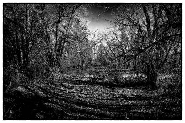 Photograph - Shadowed Grove by David Patterson