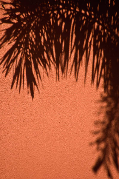Photograph - Shadows Of A Palm by Carolyn Marshall