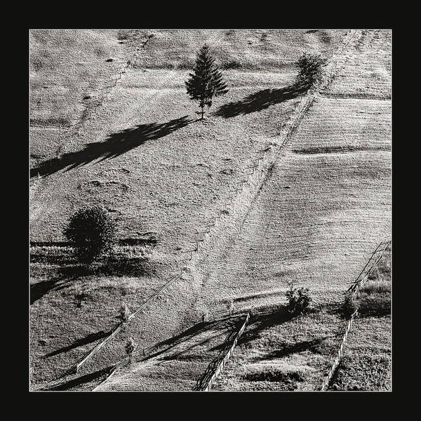Photograph - Shadows Of Tree by Odon Czintos