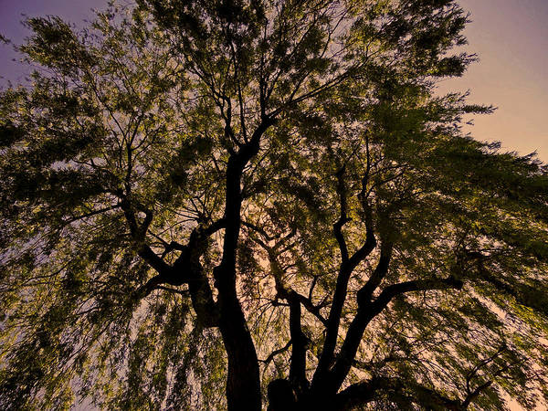 Photograph - Shady Tree ... by Juergen Weiss