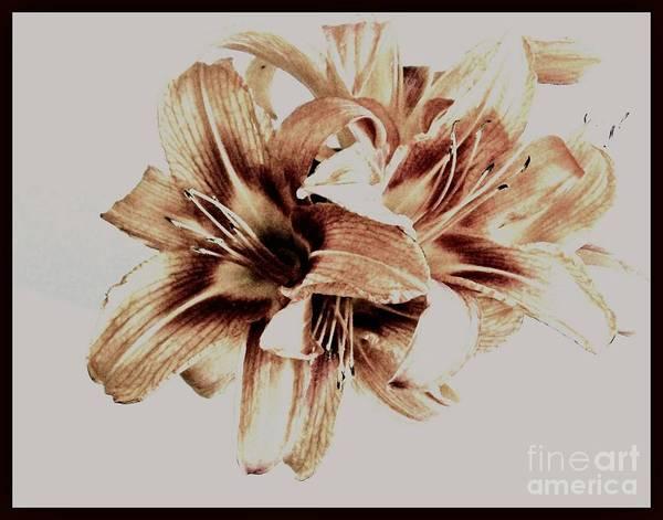 Tigerlily Wall Art - Photograph - Sheer Tigerlilies by Marsha Heiken
