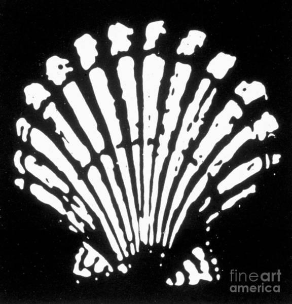 Photograph - Shell Oil Logo, 1904 by Granger