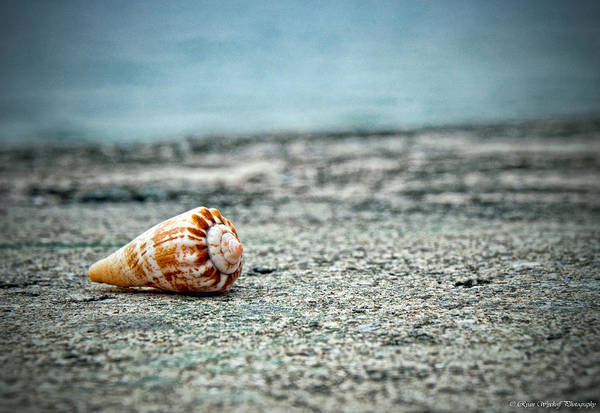 Photograph - Shell by Ryan Wyckoff