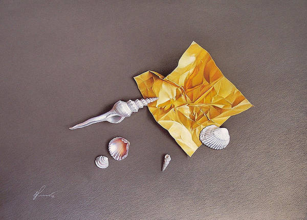 Drawing - Shells Of The Day by Elena Kolotusha