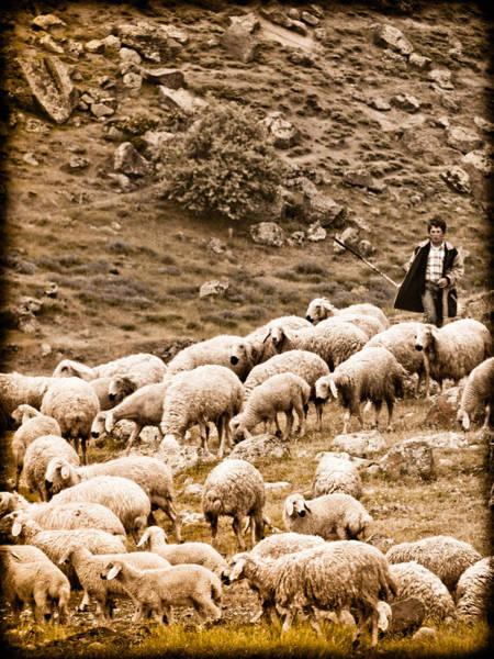 Guzelyurt, Turkey - Shepherd Art Print