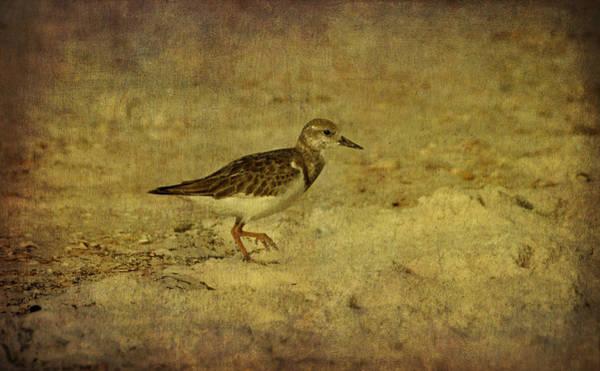 Photograph - Shore Bird by Sandy Keeton
