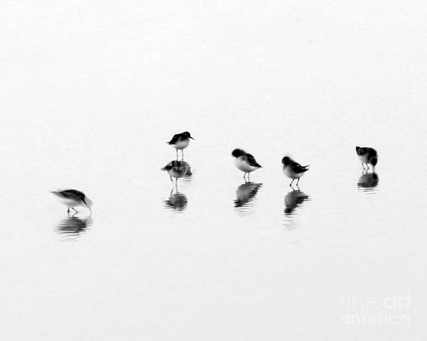 Wall Art - Photograph - Shorebirds by Tom Cheatham