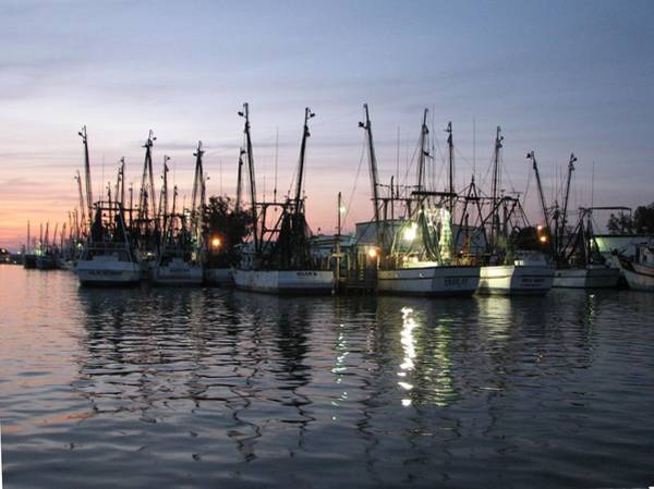 Photograph - Shrimp Boat Fleet by Keith Stokes