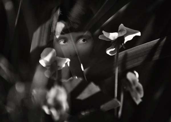 Photograph - Shrinking Violet by Rebecca Sherman