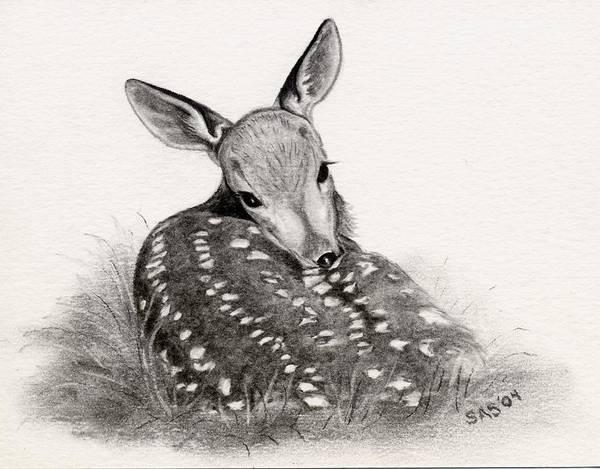 Whitetail Drawing - Shy Boy by Sherri Strikwerda