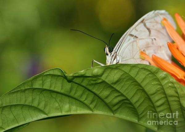 Photograph - Shy Butterfly by Sabrina L Ryan