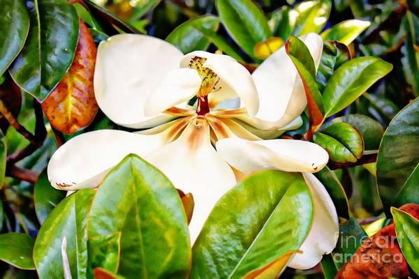 Blooming Tree Mixed Media - Shy Magnolia by Teresa Davis