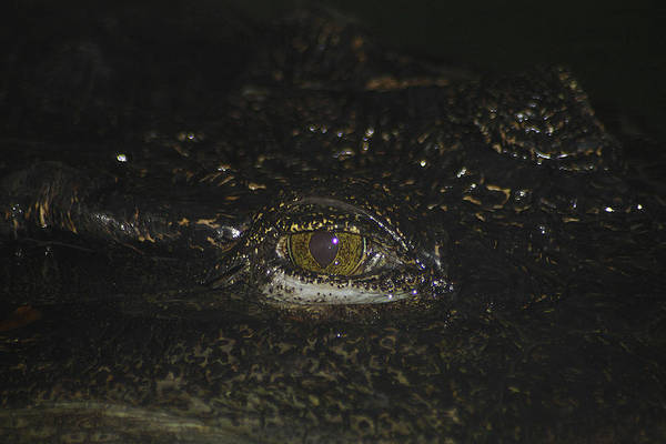 Photograph - Siamese Crocodile 2 by Scott Hovind