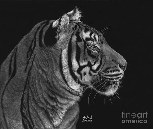 Scratchboard Drawing - Siberian Tiger by Sheryl Unwin