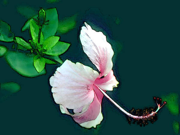 Hibiscus Flower Painting - Side View Of Pink Hibiscus Blossom by Elaine Plesser
