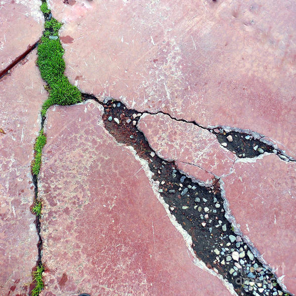 Photograph - Sidewalking Three by Marlene Burns