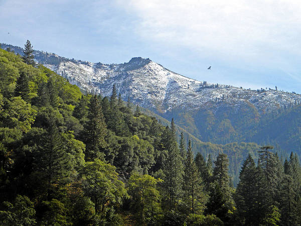 Photograph - Sierra First Snow by Frank Wilson