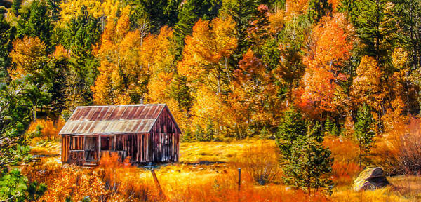 Painting - Sierra Nevada Aspen Fall Colors With Rustic Barn by Scott McGuire
