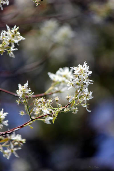 Photograph - Signs Of Spring by Deborah Hughes