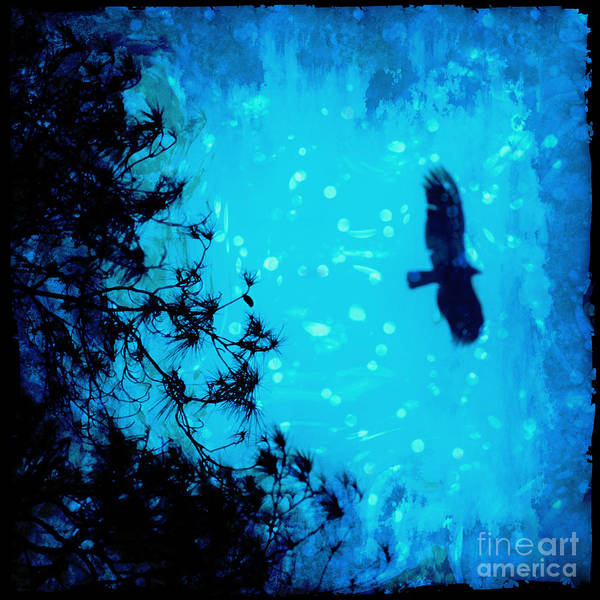Wall Art - Photograph - Silent Night by Katya Horner