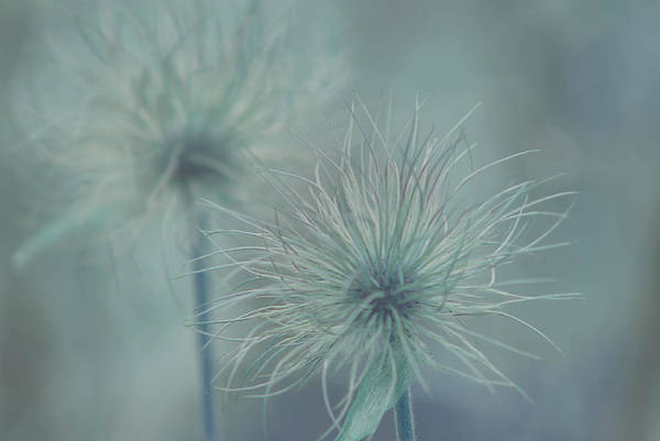 Photograph - Silent Whispers by Robin Webster