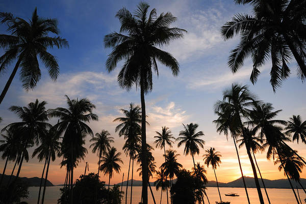 Wall Art - Photograph - Silhouette Of  Coconut Tree by Teerapat Pattanasoponpong
