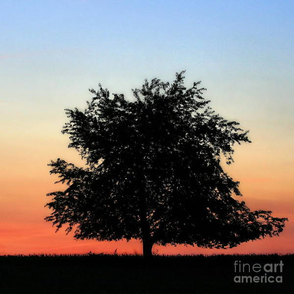 Make People Happy  Square Photograph Of Tree Silhouette Against A Colorful Summer Sky Art Print