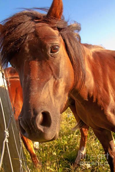 Photograph - Silly Horse by Rachel Duchesne