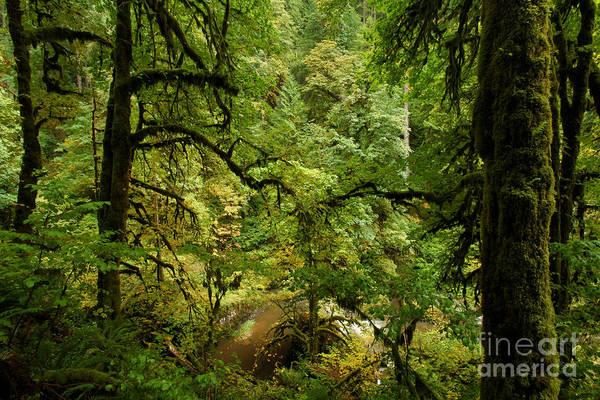 Photograph - Silver Falls Rainforest by Adam Jewell