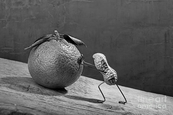 Ripe Photograph - Simple Things - Sisyphos 02 by Nailia Schwarz