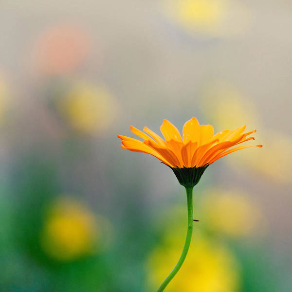 Dof Photograph - Simplicity by Joel Olives