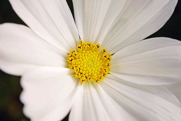 Photograph - Simplicity by Melanie Moraga