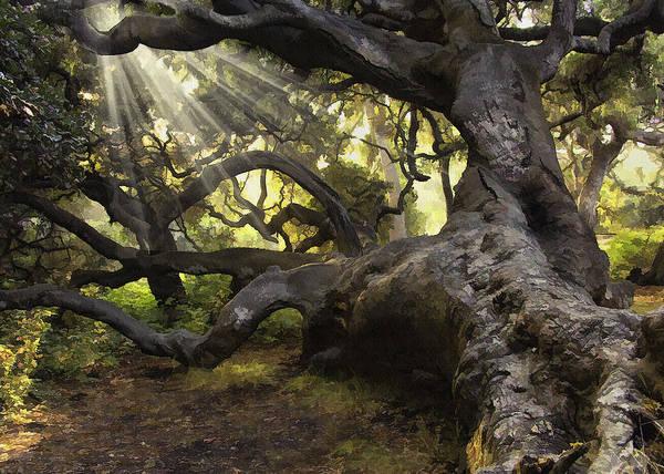 California Oak Digital Art - Simply Old Oak  by Sharon Foster