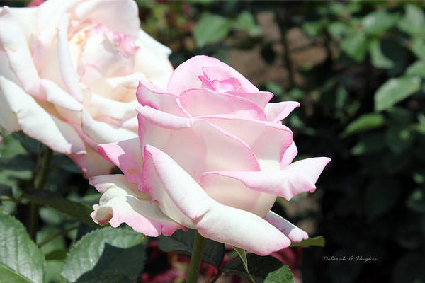 Photograph - Simply Pink by Deborah Hughes