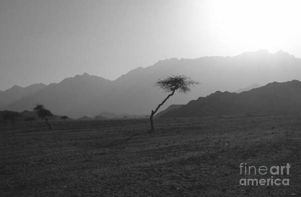 Montain Photograph - Sinai Desert by Heiko Koehrer-Wagner