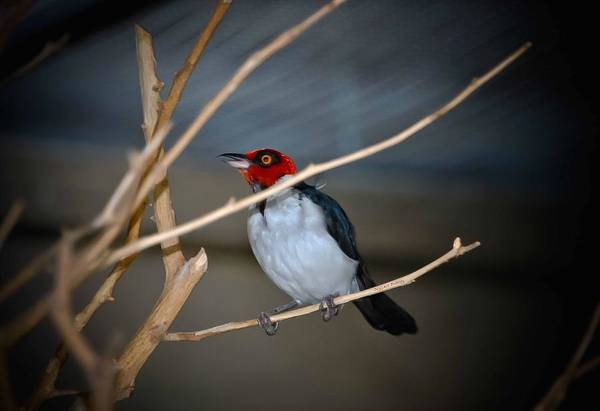 Chirping Photograph - Singing A Song by DigiArt Diaries by Vicky B Fuller