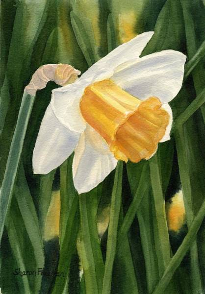 Daffodils Wall Art - Painting - Single Yellow Daffodil by Sharon Freeman