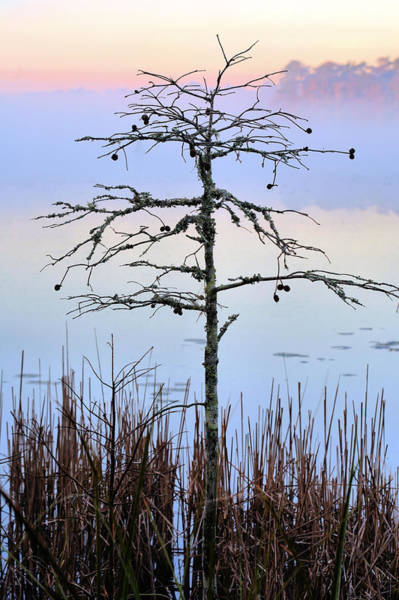 Photograph - Singular  by JC Findley