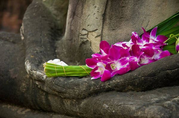 Photograph - Sitting Buddha In Meditation Position With Fresh Orchid Flowers by U Schade
