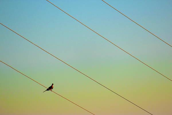 Glendale Wall Art - Photograph - Sitting On Power Lines by Karol Franks