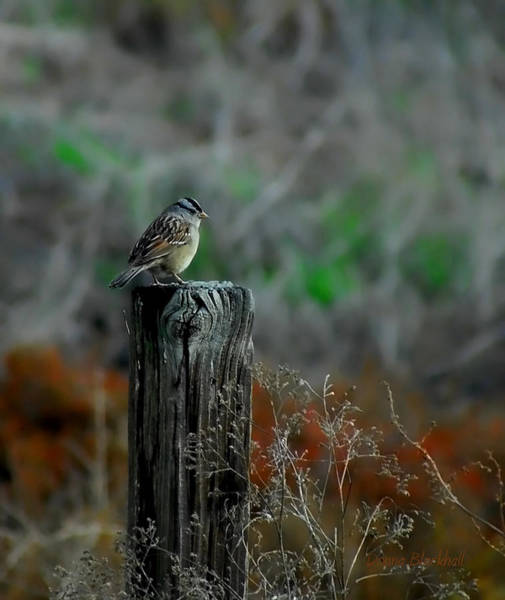 Wall Art - Photograph - Sitting On The Fence by Donna Blackhall